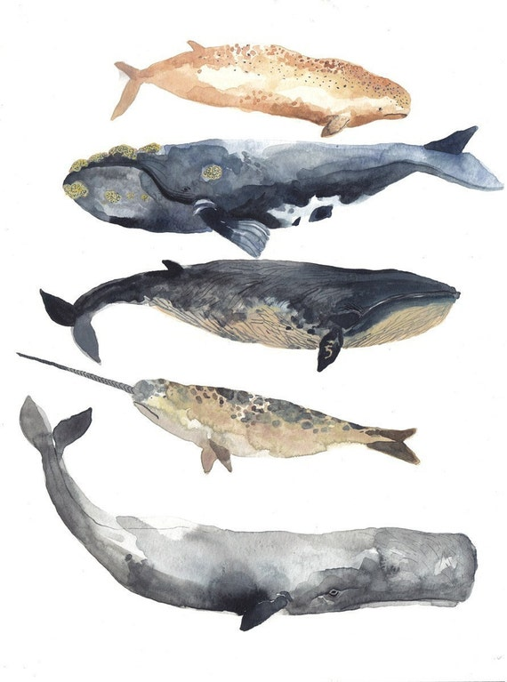 MADE TO ORDER Five Whales   -Original watercolor painting