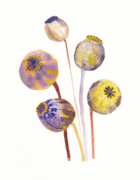 "Poppy Pods - 11"" x 14"" Archival Print"