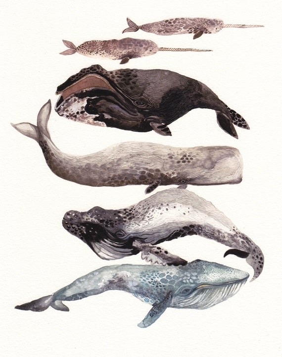 Six Whales Stacked - Archival Print