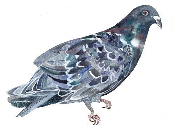 Rock Dove - Original painting