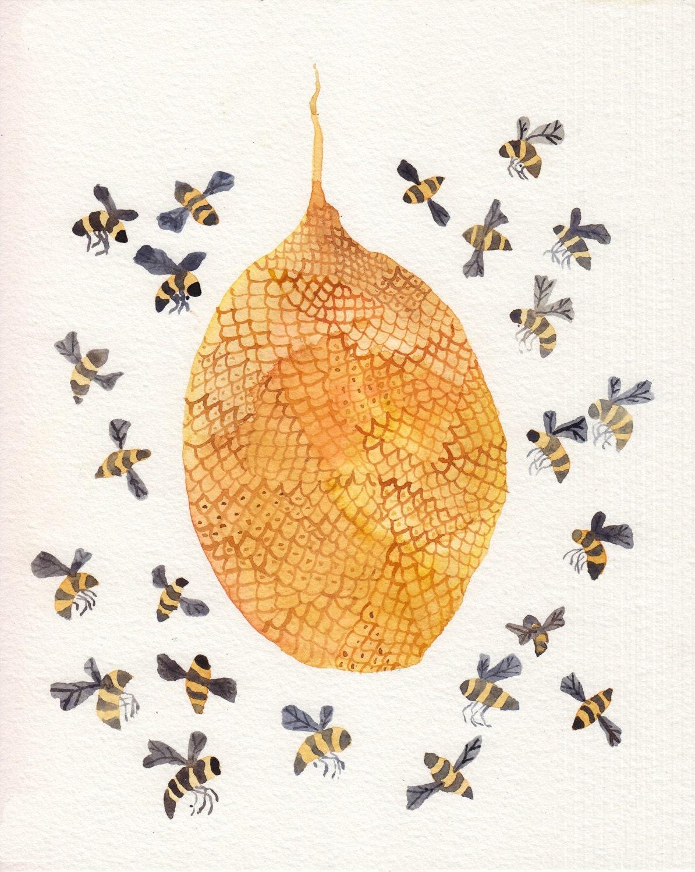 Bee Hive Paint Colour