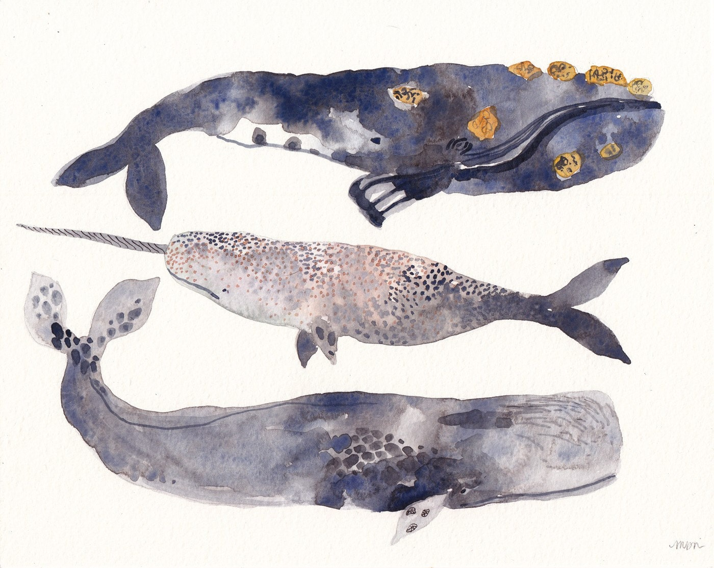 Narwhal painting