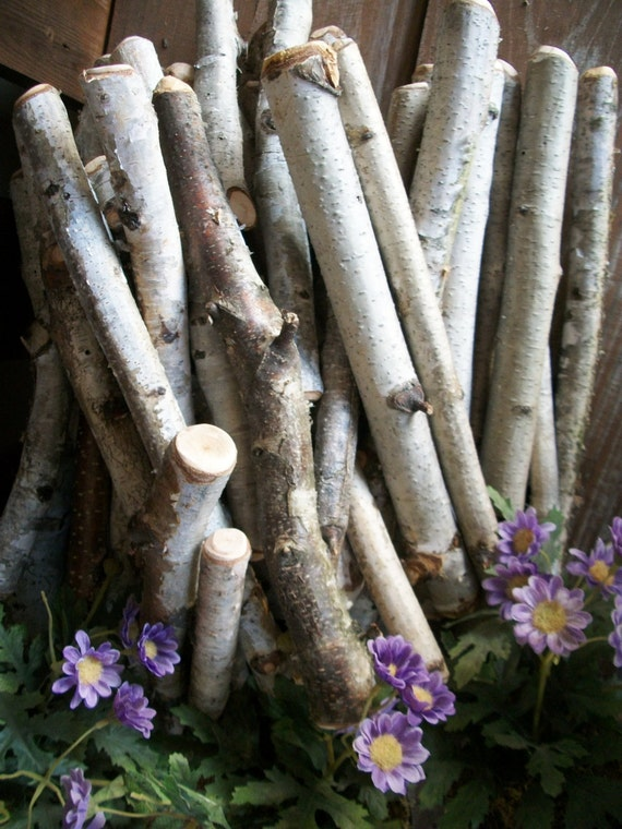 White Birch Wood Branches Rustic Natural 11 By Thehickorytree