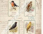 Songbirds -  Vintage French Script Bird Collage  Print