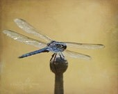 Dragonfly in Texture 4 x 6