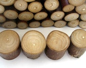petrified. rustic modern wood branch magnets for the kitchen or office. set of four.