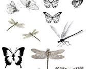 Lampwork Transfers - Flutter