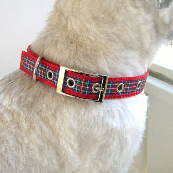 Recommended Webbing Weight For A Small Dog Collar