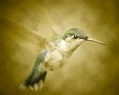 8X10 Hummingbird Series Self Portrait
