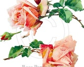 Shabby Vintage Chic Beautiful Lush 2 Single Roses Decals - De-Ro-39