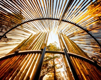 "South Korea, Anyang art park, color photograph, landscape architecture, nature photography,  ""Bamboo Rockets"""