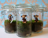 Hear No Evil, See No Evil, Speak No Evil - Set of Three Tiny Moss Terrariums with Monkeys