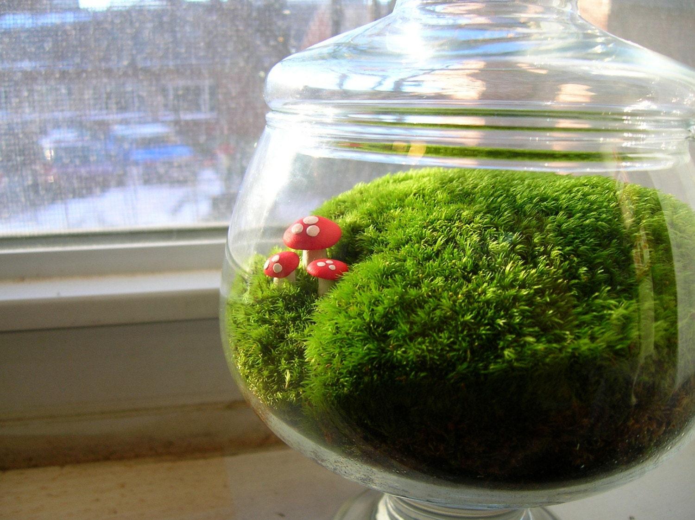 medium pedestal moss terrarium with red mushrooms. Black Bedroom Furniture Sets. Home Design Ideas