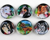 Dog Bubble Magnets, Set of 6