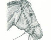 Custom Pet Pencil Portrait - 9 x 12