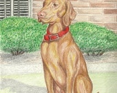 Custom Colored Pencil Pet Portrait- One Subject- 8 x 10