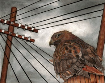 """Hawk and power lines 10"""" x 8"""" giclee print"""