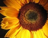 Greeting YOU ARE MY SUNFLOWER