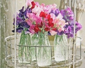 Sweet Peas in Vases On Display - 8 x 10 PHOTOGRAPHY Print
