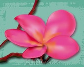 Pink Tropical Flower ACEO Print