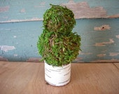 Mini Topiary of Moss and Birch, great wedding favor