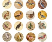 birds bird egg parchment paper old book pages animal clip art 1.5 inch circles collage sheet
