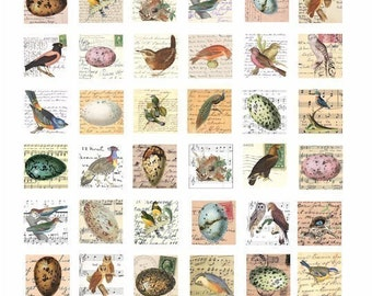 vintage clip art bird egg nest postcards handwriting sheet music 1 inch squares collage sheet