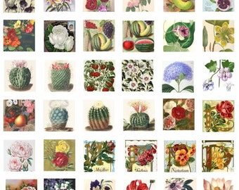 vintage flowers flower fruit cactus CLIP ART digital download graphics images printable collage sheet 1 inch squares for pendants charms