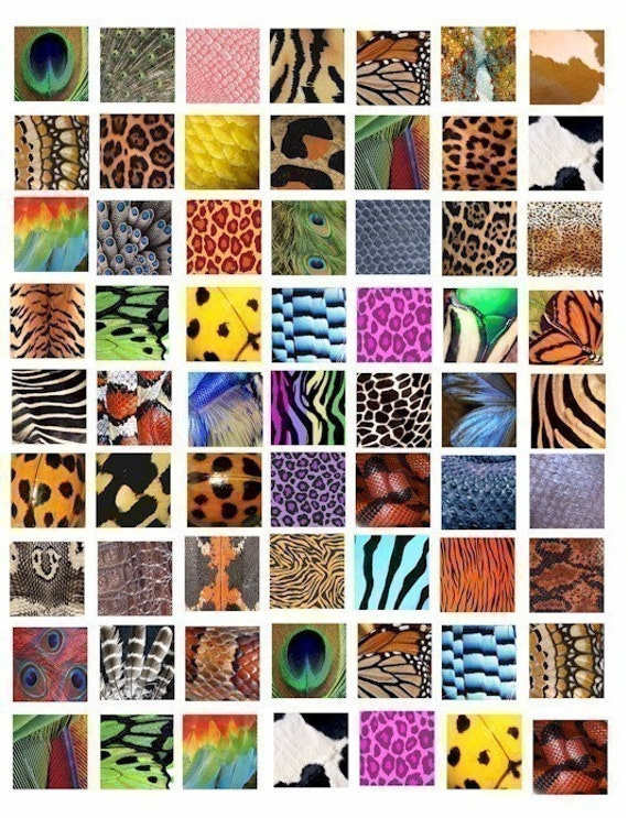 Animal Insect skin textures patterns clip art collage sheet 1 inch squares tiger leopard snake digital download graphics images printables
