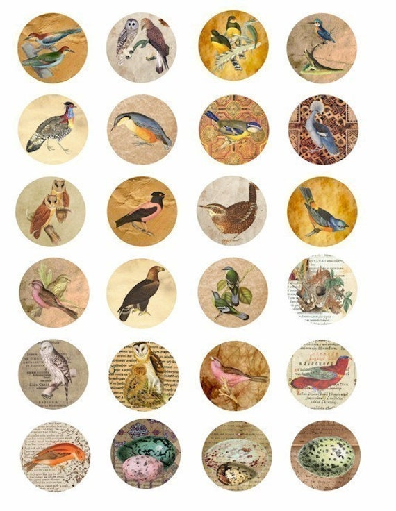 birds bird egg parchment paper collage sheet digital download image graphics old book pages animal clip art 1.5 inch circles