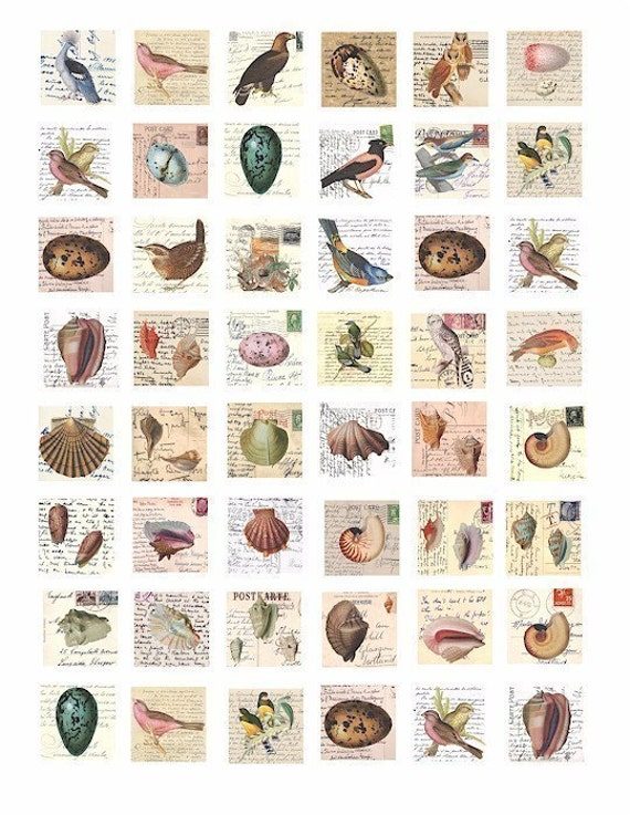 bird eggs nest sea shells postcards 1 inch squares collage sheet digital download images graphics animals wildife vintage art pendants pins