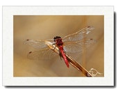 Tattered \/ Fine Art Photography Card 5X7