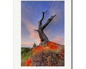 Standing Time \/ Fine Art Photography Greeting Card 5X7