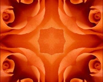 10 x 10 Orange Rose Photograph Kaleidoscope Print