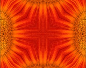 10 x 10  Orange Gerber Daisy Photograph Kaleidoscope Print