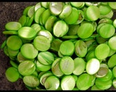 Apple Green OVAL SHELL Beads - GM223
