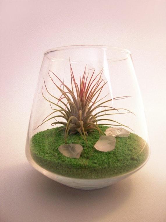 Contemporary Spring Pet Terrarium -- Discounted