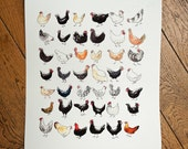 Watercolor  Art Print 42 Chickens