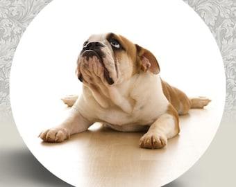 "Bulldog Pocket Mirror or Magnet - 2.25"" 2-1/4 inch"