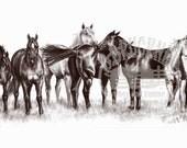 The Remuda Horse Art Print by B.Bruckner in Graphite Pencil