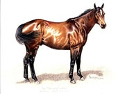 Quarter Horse Gelding Portrait Drawing B Bruckner