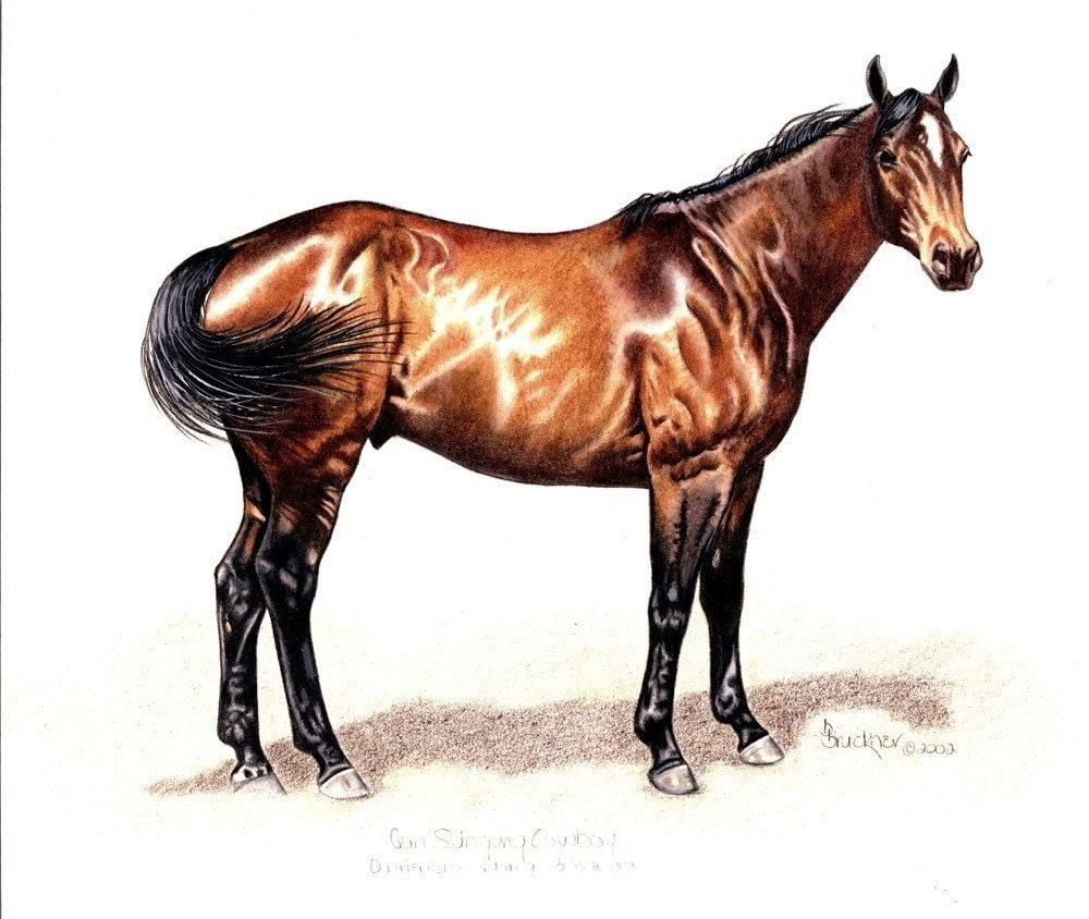 Quarter horse drawing - photo#12