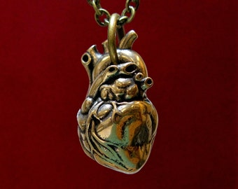 Anatomical Heart In Solid Bronze 154