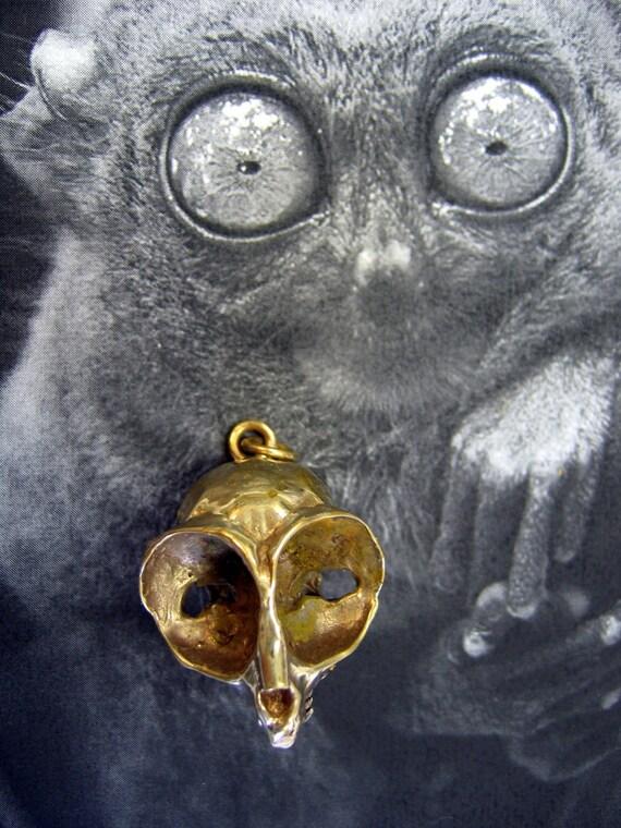 Image Gallery tarsier skull