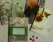 A summer garden. Set of 4 postcards.