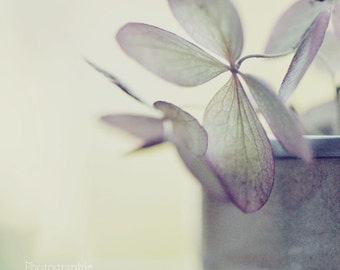 Flowers in October. Pastel. Fine art photography print. 8x8 inches (20x20 cm)