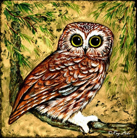 Owl - Saw Whet Owl - Print - Hand Drawing - Acid Free Paper - Pencil - Water Color - Pen Ink - by Will Kay Studios