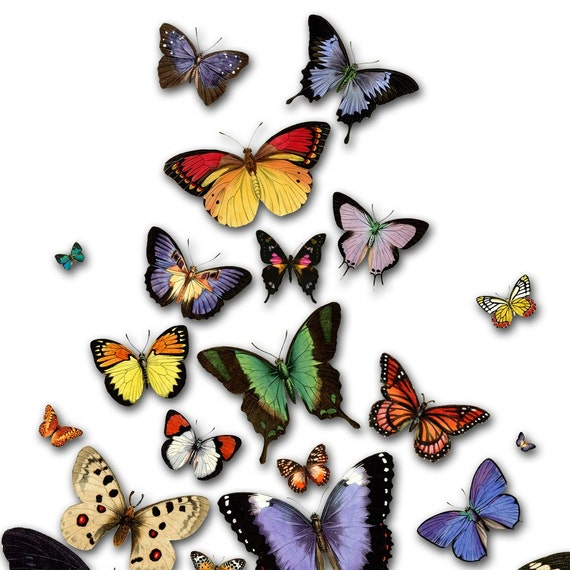 FREE AS A BUTTERFLY (16x20 inch Fine Art Poster Archival Print)