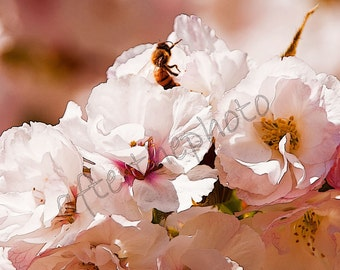 Fine Art Photography-Bee and Blossoms