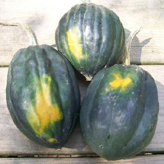 how to grow acorn squash from seed